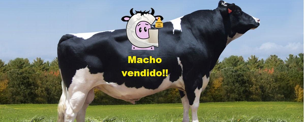 Macho vendido