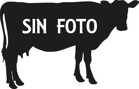 vaca sin foto