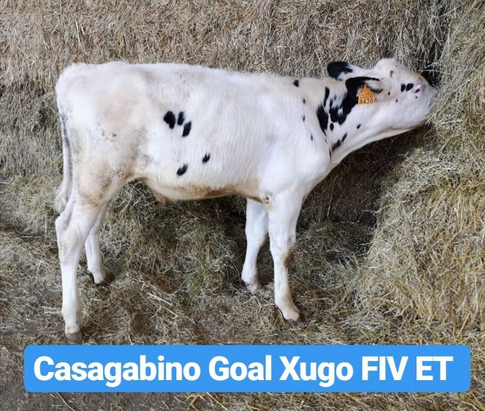 Casagabino Goal Xugo FIV ET